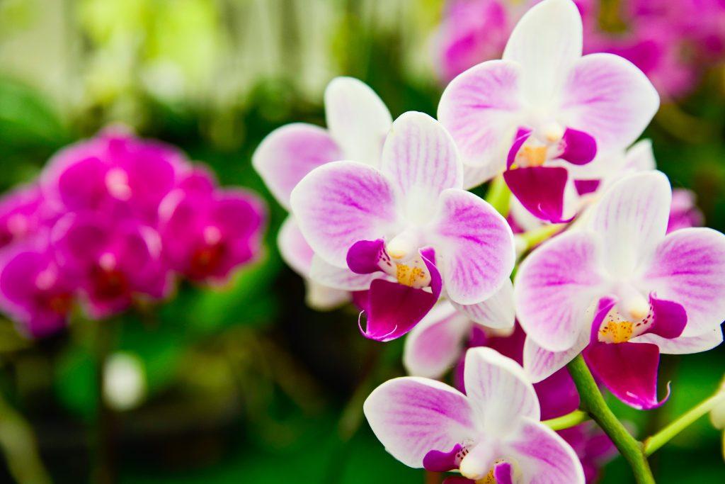 можно орхидея откуда она родом фото время курса узнаете