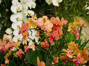 Черные и белые пятна на орхидее