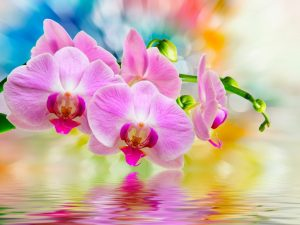 Выращивание орхидеи из китайских семян