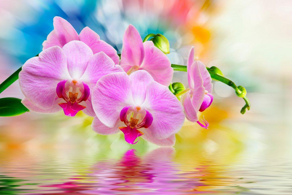 семена орхидеи из китая как вырастить