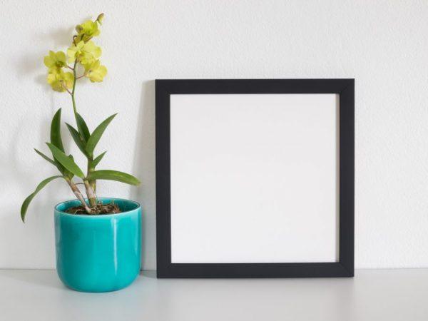 Специальный грунт для орхидеи
