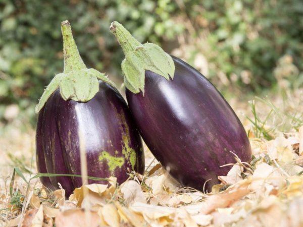 Для удачного урожая нельзя переохлаждать растение