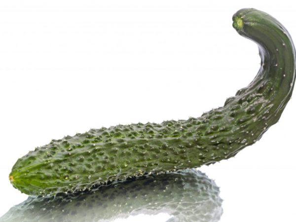 Плод может достигать длины 80 см