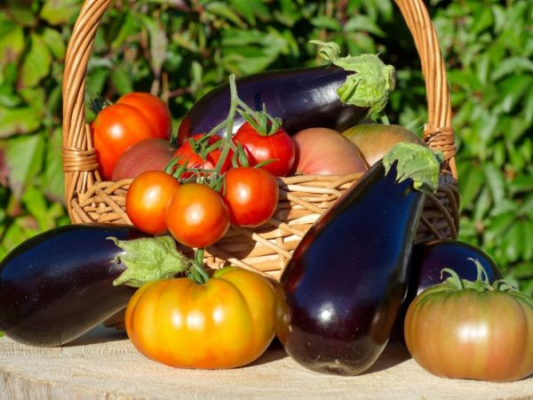 При правильном выращивании будет отличный урожай