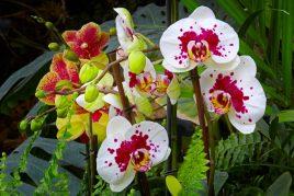 Витамины для орхидей
