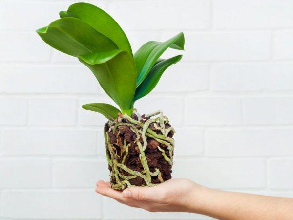 Подземные корни берут влагу из почвы