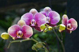Что делать с белым налетом на орхидеях