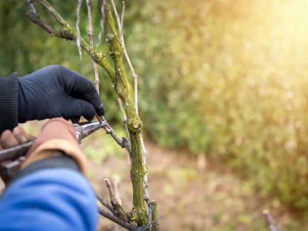 Больные растения необходимо удалять