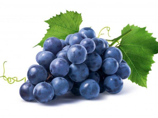 Этимологические признаки винограда