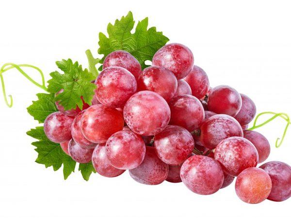 Виноград по признакам подходит к ягодам