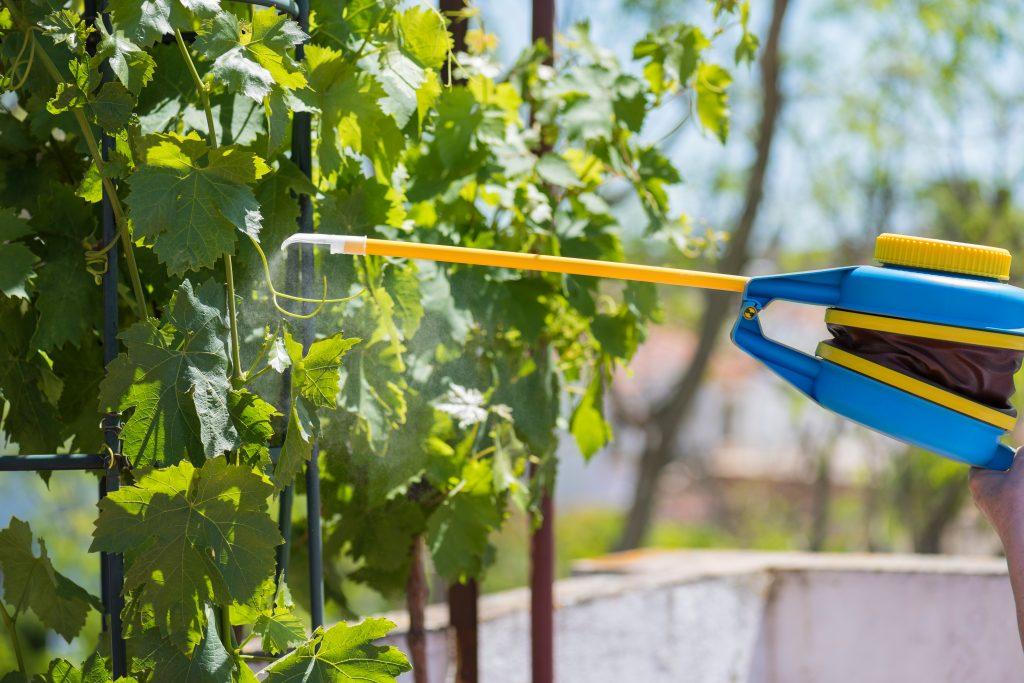 Фунгициды для винограда: какие бывают, инструкция по применению