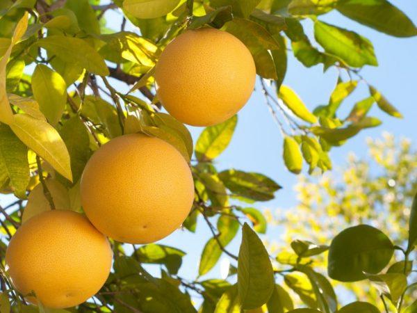 Хорошие климатические условия повышают урожайность