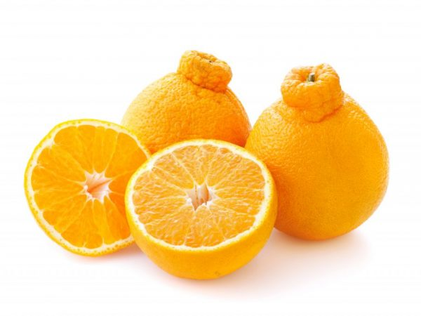 Плоды имеют вытянутую шейку на вершине
