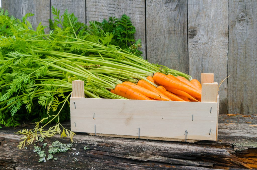 Хранение морковки в пакете в погребе