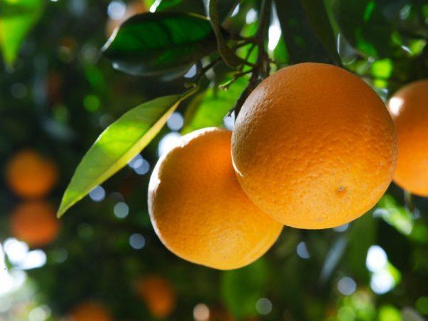 Плоды универсальны в приготовлении