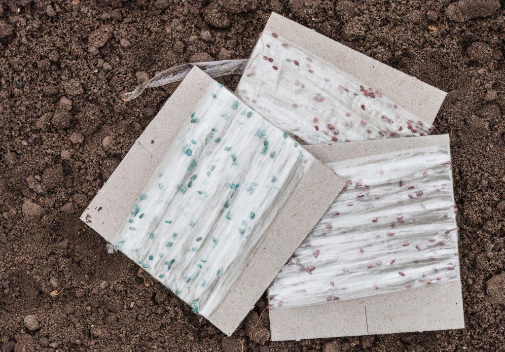 Семена моркови на ленте, в том числе особенности посадки этим методом, а также как наклеить на туалетную бумагу