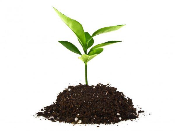 Почву для растения можно приготовить самостоятельно