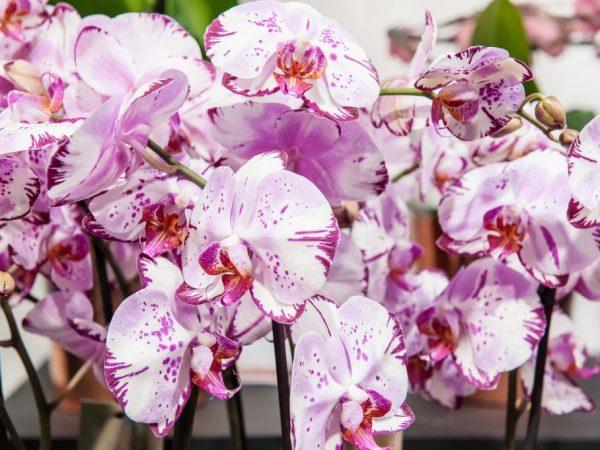 Цветы пользуются спросом