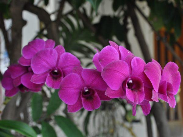 Крупные и красивые цветы