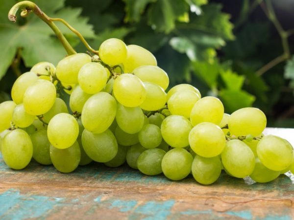 Виноград любит солнечный свет