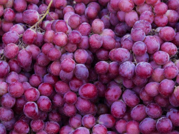 Уровень кислотности ягод влияет на хранение напитков