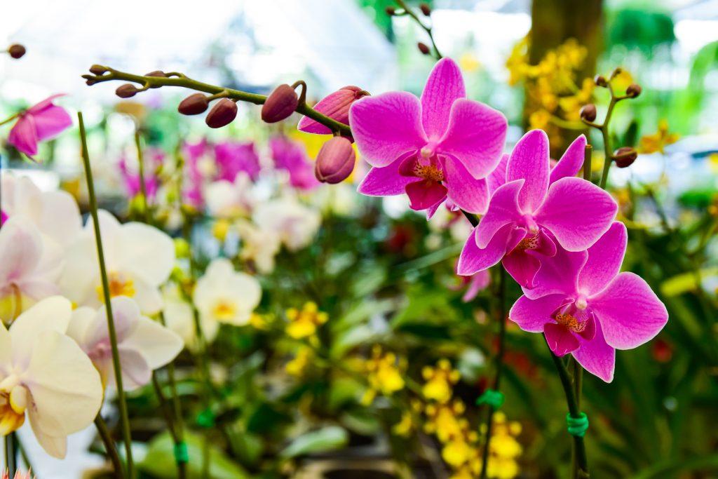 Паутинный и панцирный клещи на орхидее