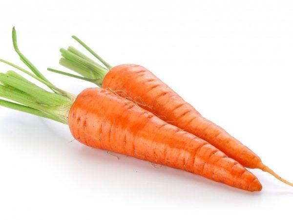 Описание сорта моркови Королева осени