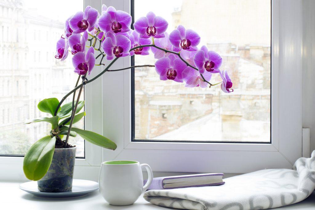 В орхидеях завелись мошки что делать
