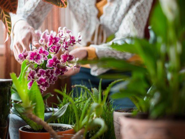 Препараты для борьбы с мошками на орхидее