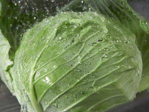 Обработка капусты Интавиром