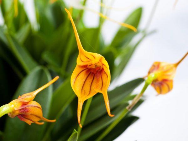 Для растения важна влажность воздуха