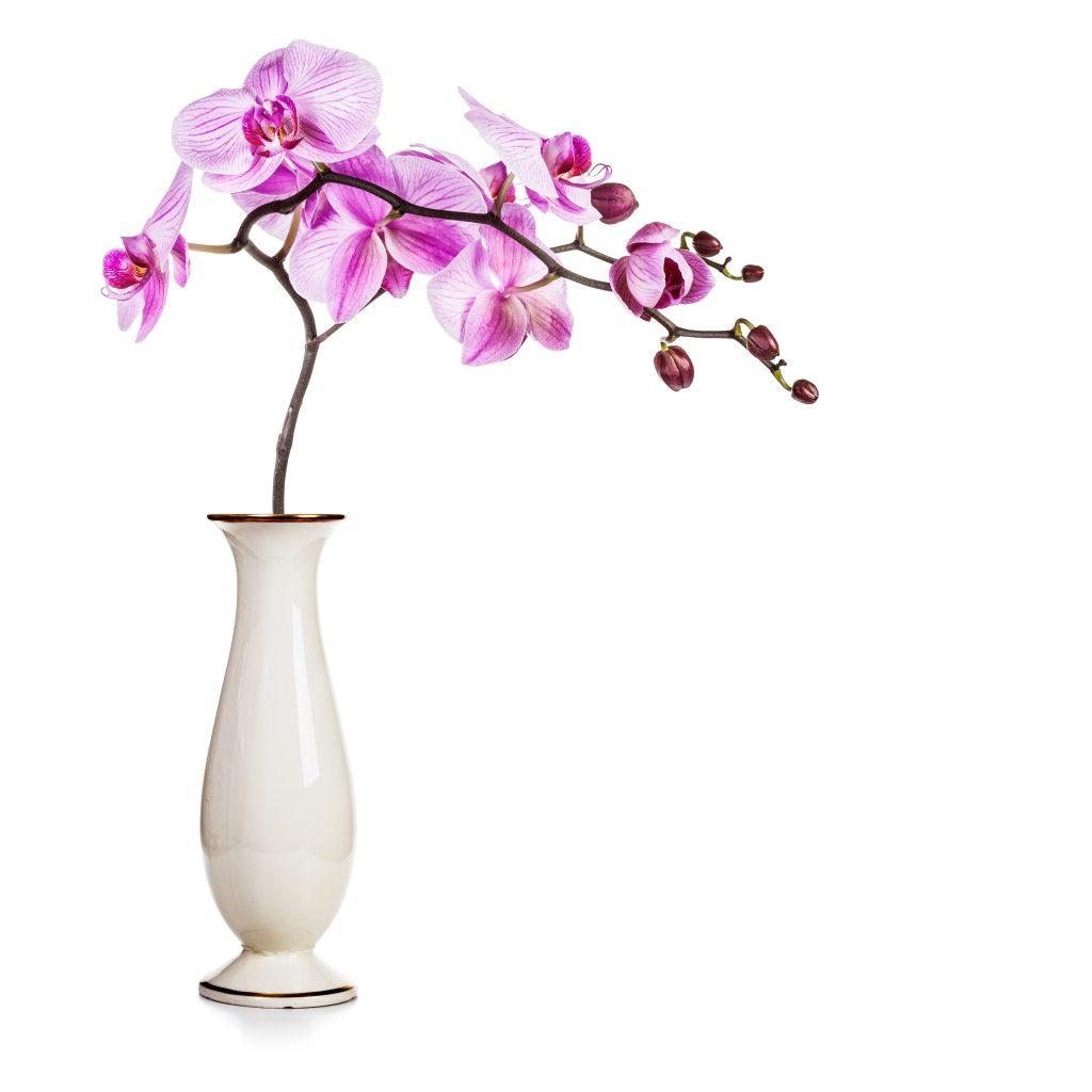 Орхидея в колбе