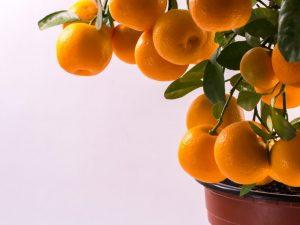 Значение мандарина по фэн-шуй