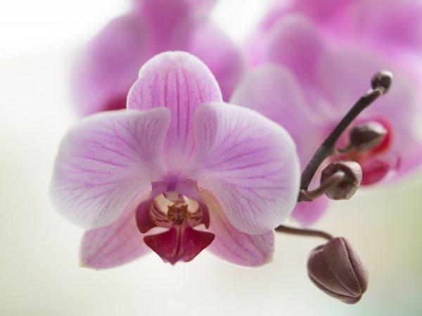 Создайте для цветка благоприятные условия