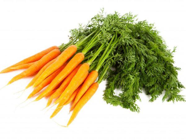 Причины пожелтения и засыхания ботвы моркови