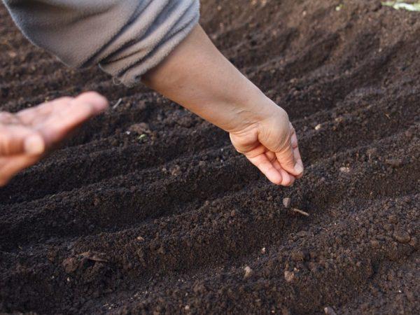 Садим только в прогретую землю