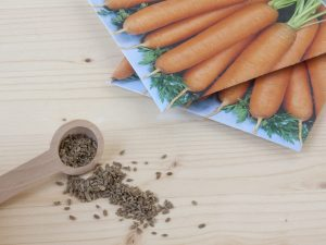 Определение сроков посадки моркови в мае 2018