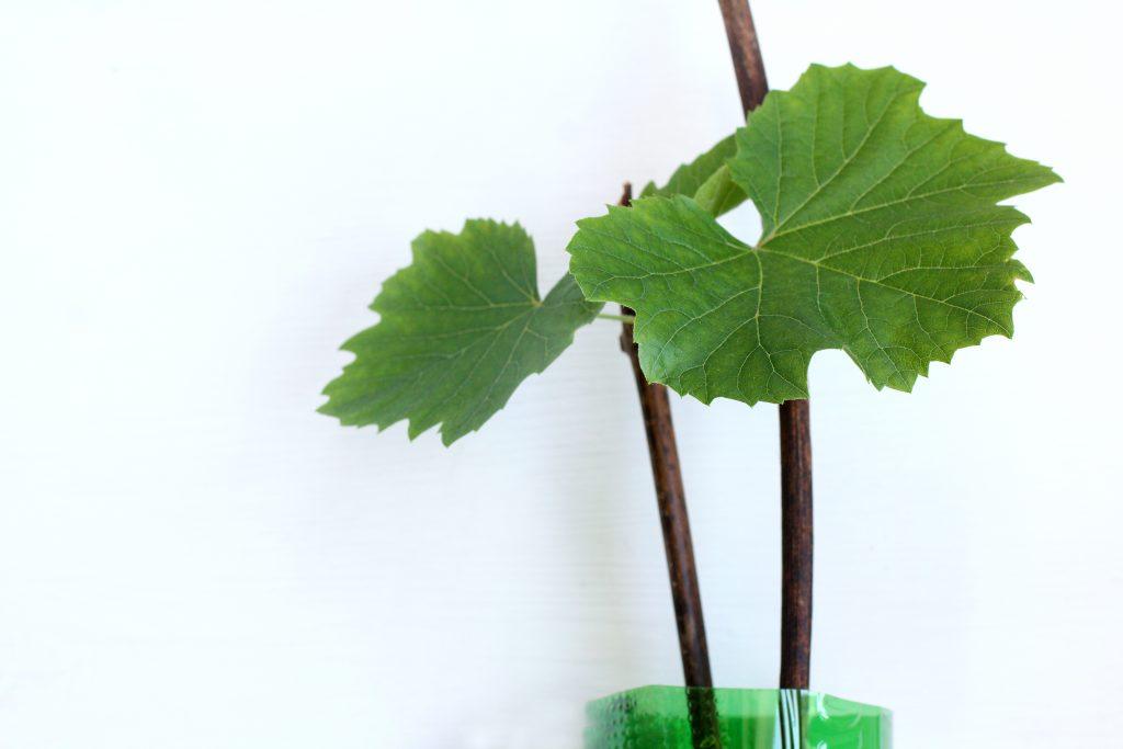 Размножение винограда черенками в домашних условиях: видео