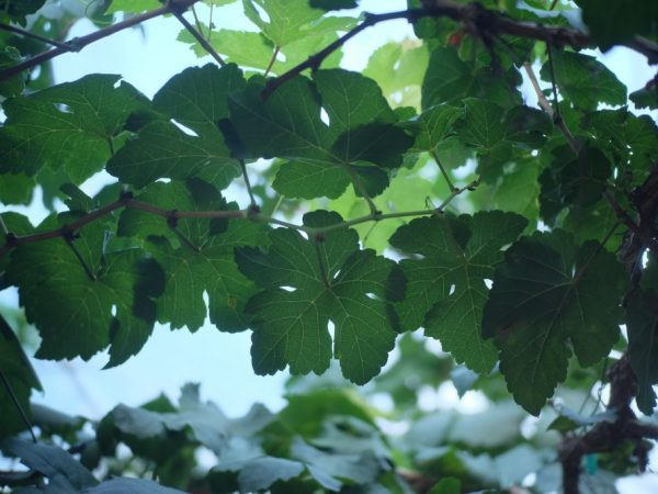 Растению необходим солнечный свет