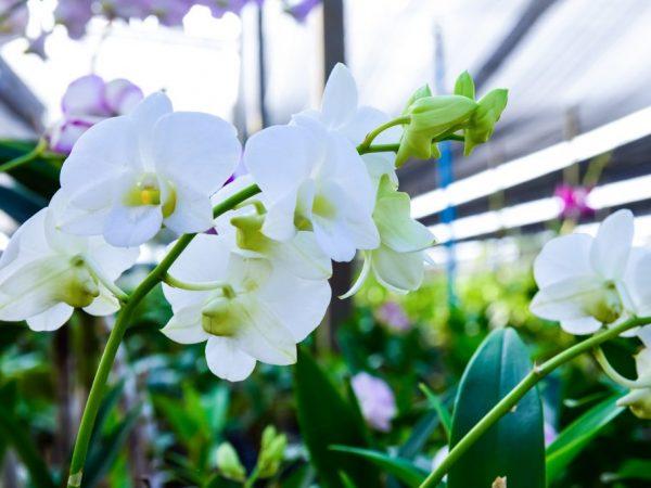 Орхидеи растут по всему миру
