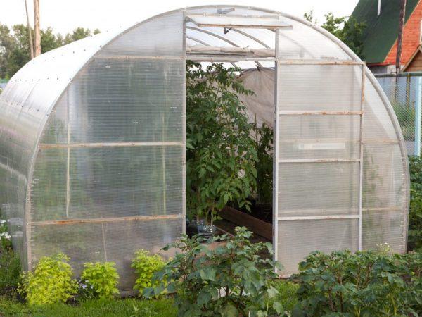 Стойкость к заморозкам зависит от сорта растений