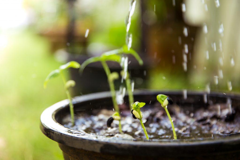 Агрикола для томатов - сбалансированное удобрение для подкормок