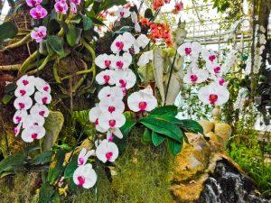 Применение Бона форте для орхидей