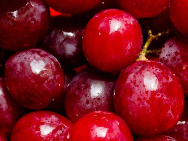Сорт винограда бычий глаз описание уход и отзывы фото