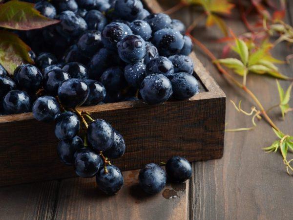 Разновидности черного винограда