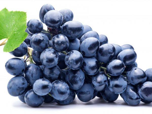Сорт винограда Галия