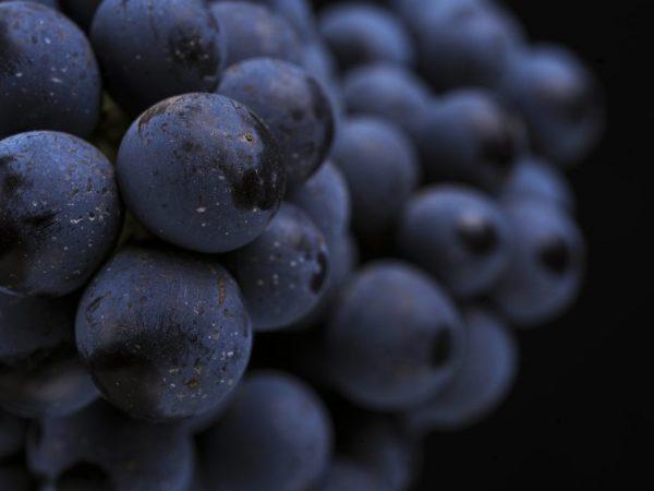 Употребления большого количества ягод может навредить