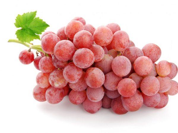 Сорт винограда Красный кишмиш