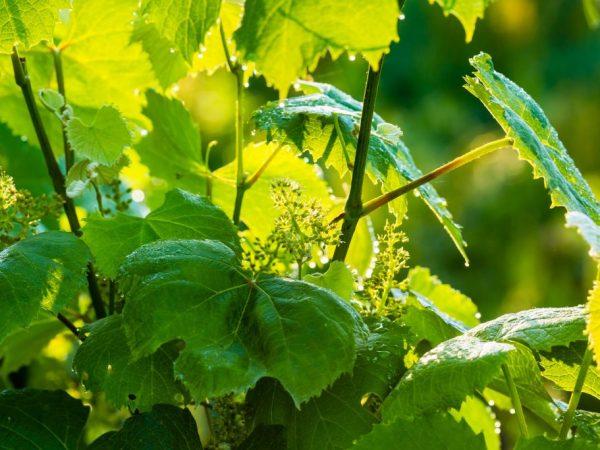Удобрения улучшают здоровье растения