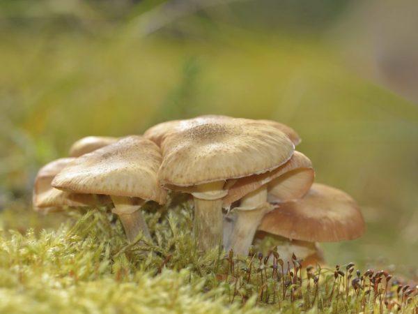 Употребление грибов повышает иммунитет